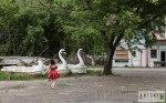 Swans at Spreepark